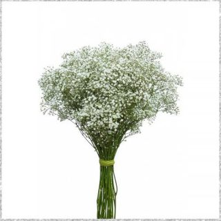 Gypso flower for decoration - online flower delivery